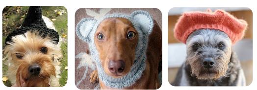 Pet Hats 1