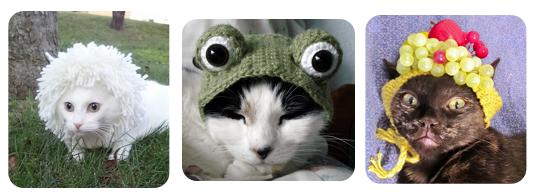 Pet Hats 2