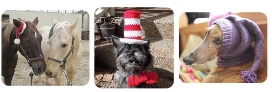 Pet Hats 3